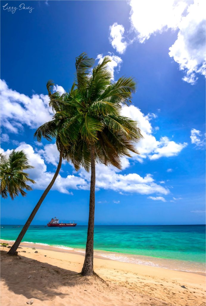Palm trees on the tranquil Paradise Beach in Barbados.