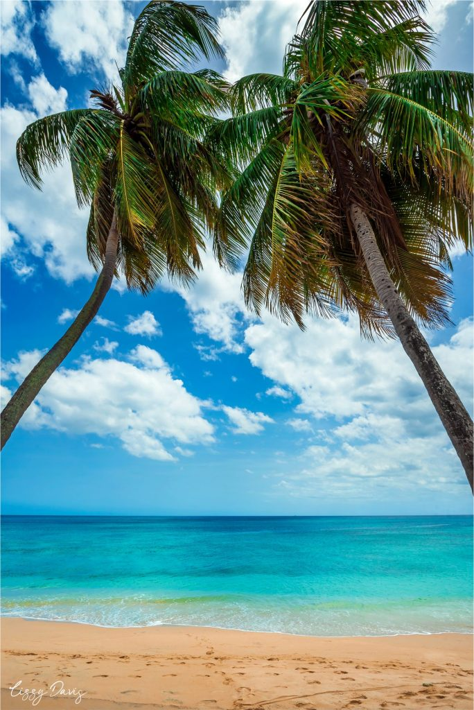 Peaceful scene of palm trees overlooking Paradise Beach, Barbados.
