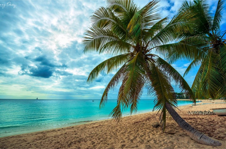 Scenic view of a palm tree on Paynes Bay Beach in the Caribbean Island of Barbados.