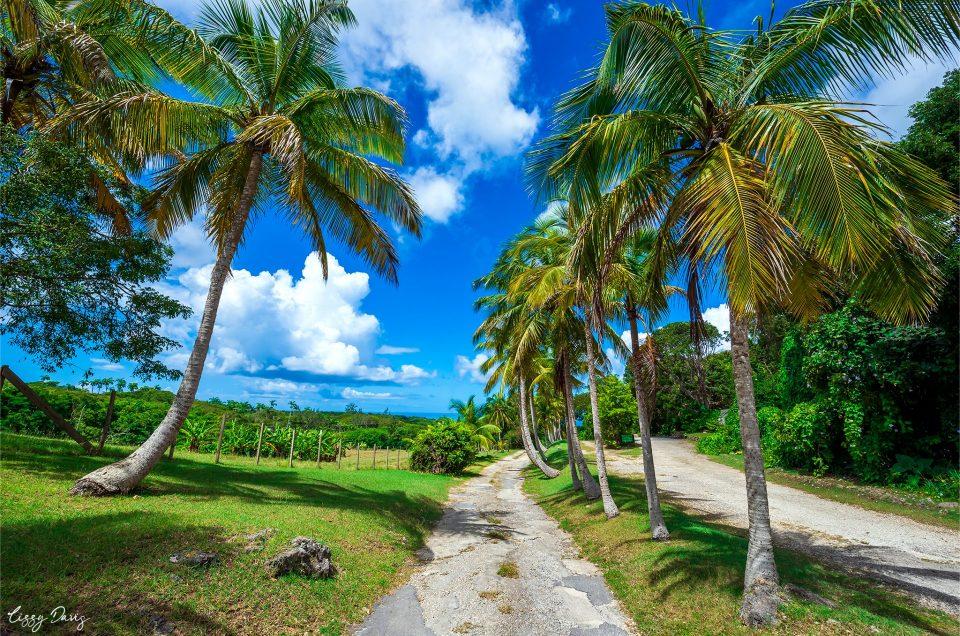 Exploring Barbados: Unexpected & Exciting Adventures at Barbados Wildlife Reserve