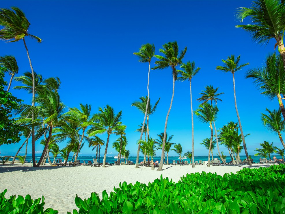 Palm trees covering Punta Cana beach in the Dominican Republic.