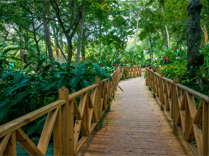 Wooden bridge through Dunn's River Falls and Park in Ocho Rios, Jamaica. Lizzy Davis travel photographer.