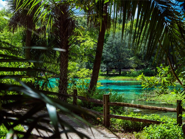 Landscape photography at Rainbow Springs State Park in Florida.