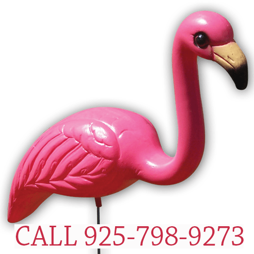 Greetings by the Yard, Cards by the Yard, Flamingo Surprise