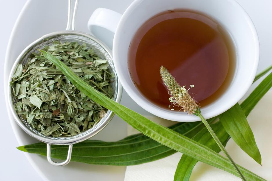 homemade remedy - herbal plantain tea (plantago lanceolata) - he   Autor: Michaela Dusíková