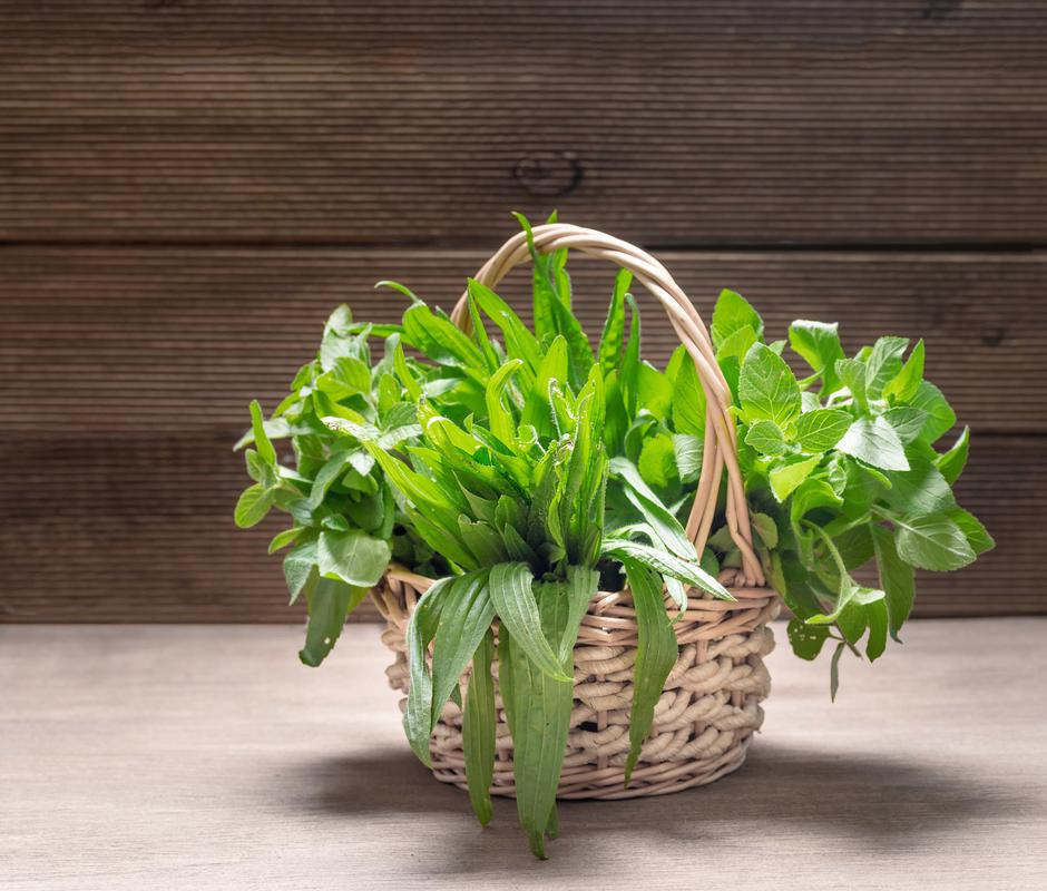 Bunches of herbs in the basket. Mint and plantain.   Autor: Dreamstime