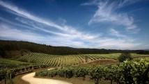O Rosal vineyards (photo: Terras Gauda)