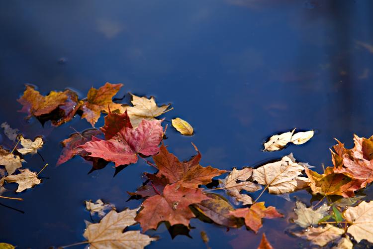 WNY Autumn Pond