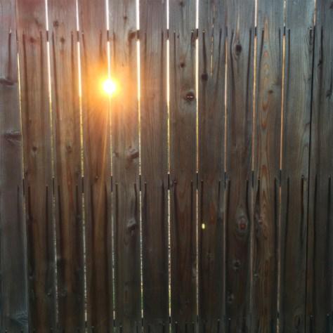 day 132 sun thru fence 6555
