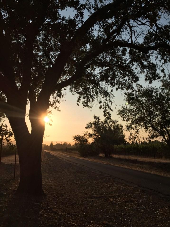 day 133 roadside sunrise tree