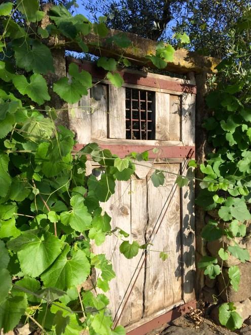 day 30 vineyard door 5567