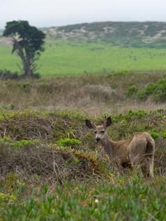 dsc00101 deer
