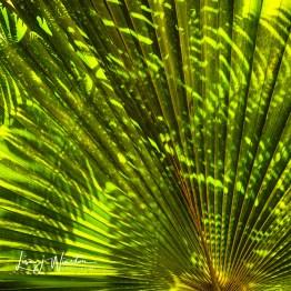 img 161250fern shadows on palm