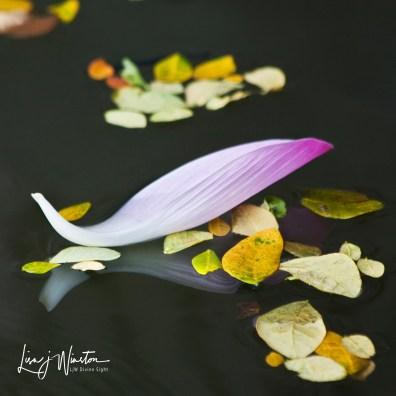 Lotus Petal Bali