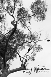 crows 02454