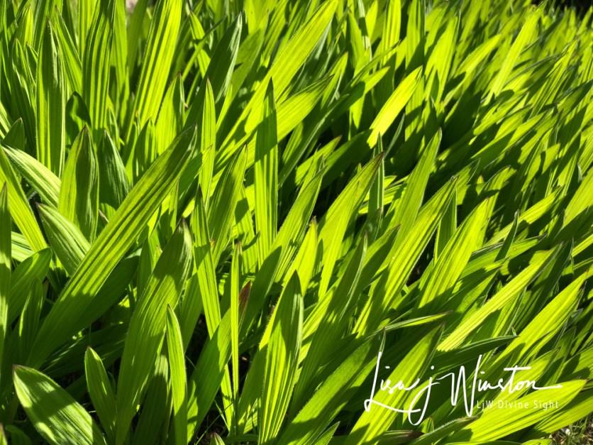 14 heart chakra green leaves 3426