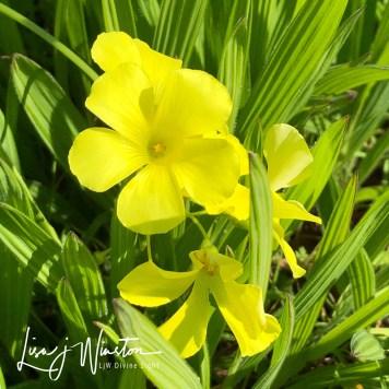 15 yellow flowers 3428