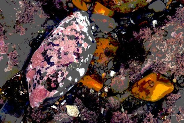 dsc06983 pink sea lichen post
