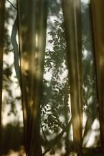 Cezanne Linen