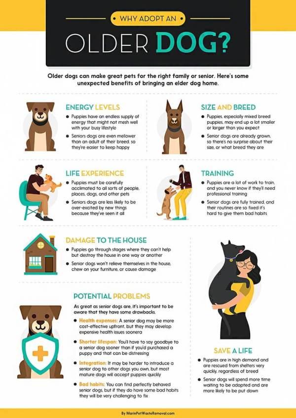 adopting-an-older-dog-infographic