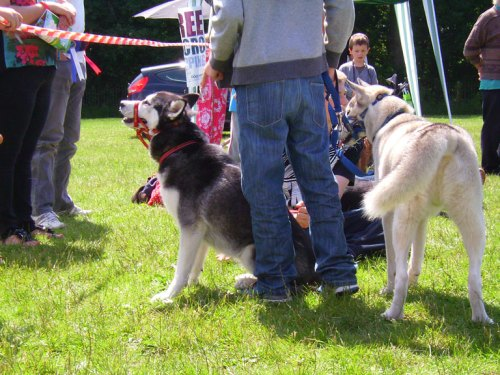 Two of the dogs entered into the dog show