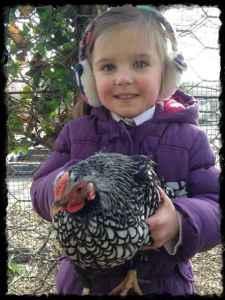 Ysgol San Sior chicken