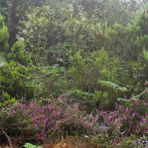 llaria brezo miel ecologica