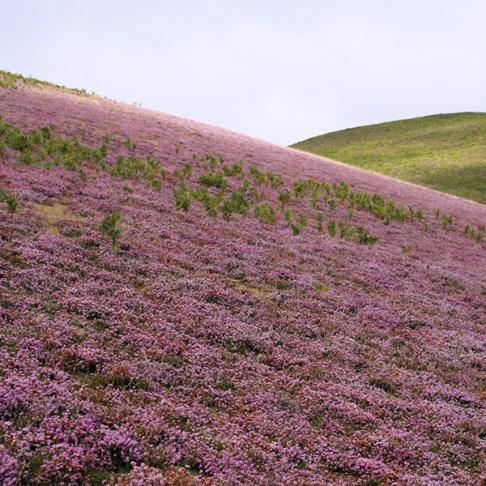 brezo verano miel llaria ecológica montaña rioja