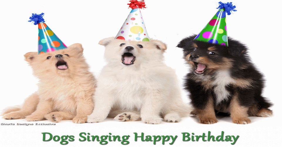 Happy Birthday Quotes For Dogs QuotesGram