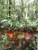 Red river, probably due to bacteria