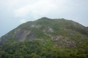 The Inselberg of Nouragues National Reserve