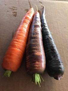 tri-colored-carrots