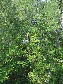 Stop the Keystone XL Pipeline_tree top activists traversing between trees