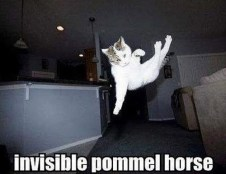 Invisible_cat_pommel_horse