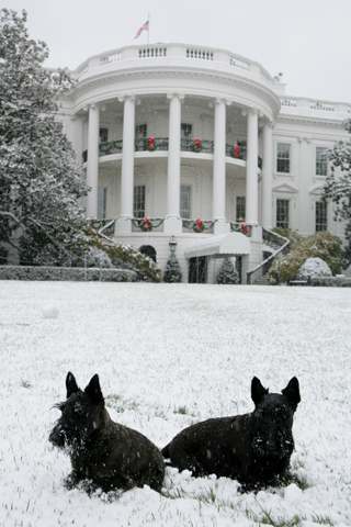 Barney Bush in the snow in front of the White House. Other dog unknown.