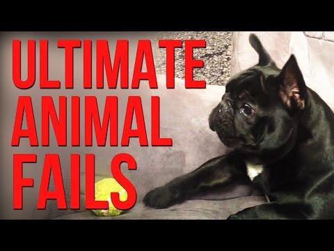 Funniest Animal Fails Compilation || FailArmy