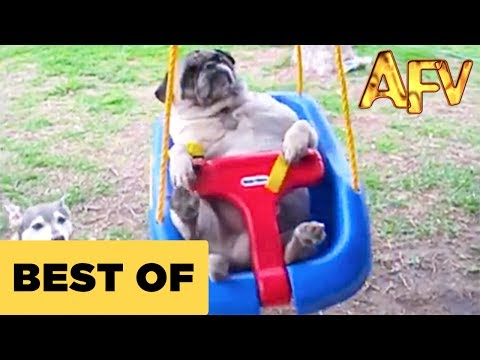 Funny Animal Videos – Over 13 Minutes Of Hilarious And Cute Animal Moments
