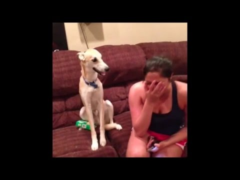 Funny Dogs Video Compilation 2015