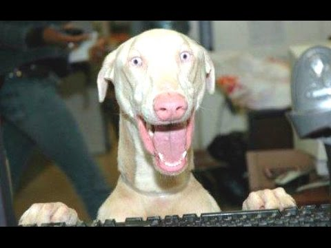 Most Funny Talking Dog Videos Compilation 2014 [NEW]