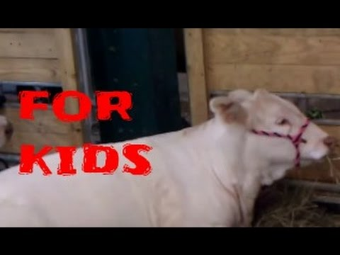 For Kids: Farm Animals, Wild Animals Funny videos For Children  to watch !