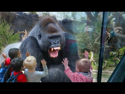 Kids and wild animals At The Zoo: Rainforest Animals and African animals