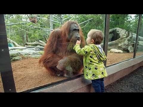 Kids and wild animals At The Zoo: types of animals Compilation