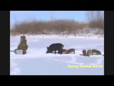 Funny animals. Animals in Russia ask to help. [Funny Animal World]