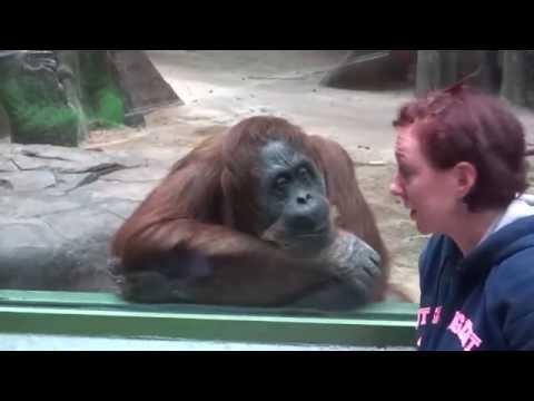 MONKEYS   Funny Animals Videos   Funny Monkey Videos   Funny Monkeys At The Zoo