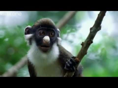 Funny Talking Animals – Walk On The Wild Side – The best BBC documentary ever!
