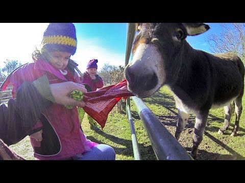 Funny Kids Video: Donkey Attacks Kids in Zoo, Good Enough to Eat – Funny Animals