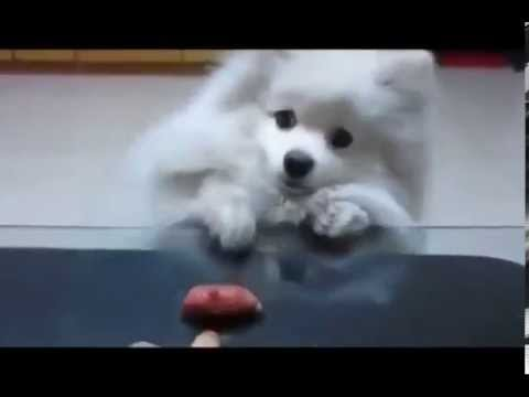 Funny video pets and wild animals compilation