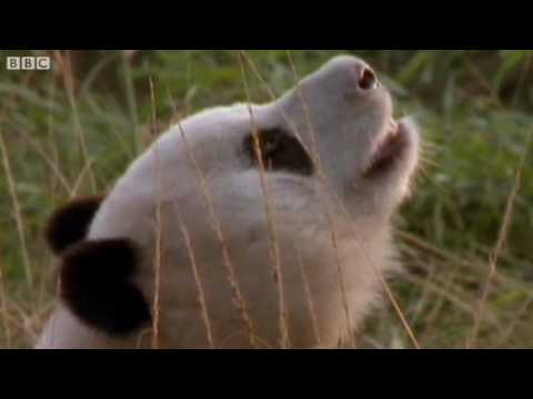 Funny Animals Talking For Sport Relief – Walk On the Wild Side – BBC Sport Relief Night 2010
