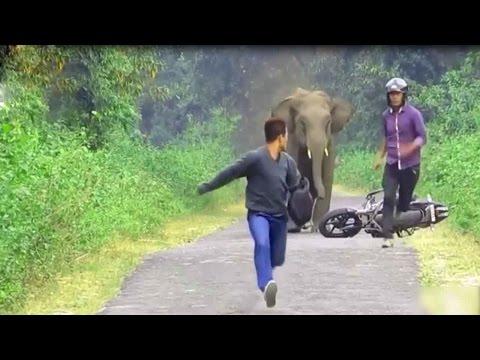 Elephants attacks human car    Animals attack human   Funny  Amazine Wild Animals attacks