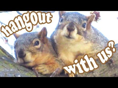 California Ground Squirrel – Tree Squirrels Wild Animals – Cute Funny Wildlife Animal Videos Jazevox